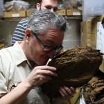 El Titan de Bronze raw tobacco aroma