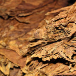 El Titan de Bronze raw tobacco
