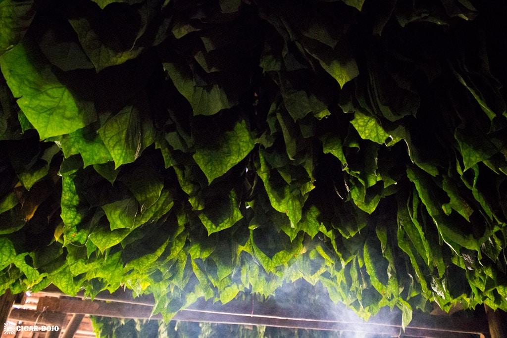 Green tobacco curing General Cigar Dominicana