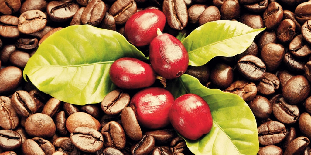 Coffee fruit and coffee beans