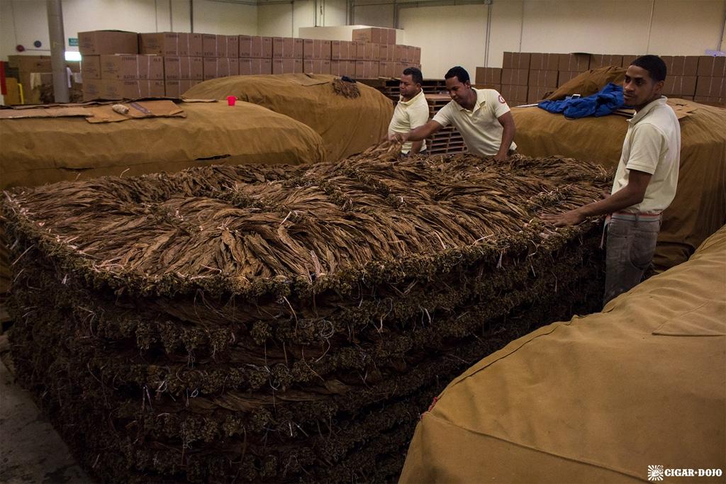 Davidoff tobacco pilon