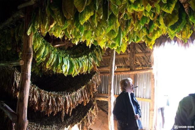 Davidoff tobacco curing