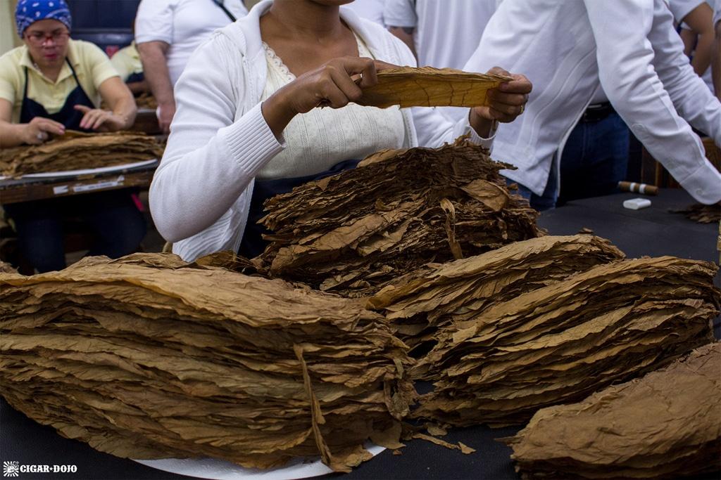 Cigars Davidoff tobacco sorting
