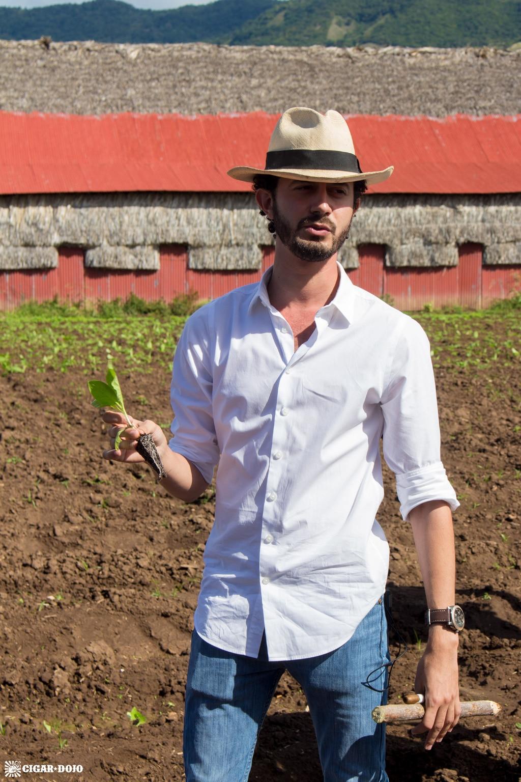 Klaas Kelner tobacco transplanting