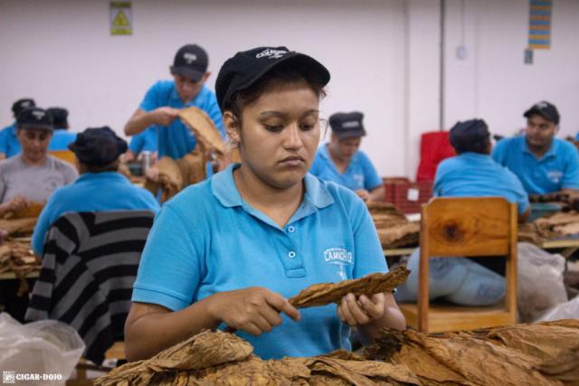 Camacho tobacco sorting