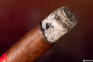 Davidoff Year of the Pig Limited Edition 2019 cigar ash